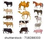 Set Of Farm Animals   Bulls ...