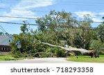 A Laurel Oak Tree Toppled By...