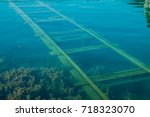 track in water  bled lake ... | Shutterstock . vector #718323070