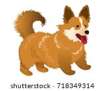 dog  pembroke welsh corgi .... | Shutterstock .eps vector #718349314