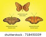 Butterfly Fritillary Set Vector ...