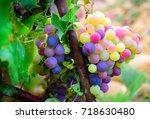 dark bluish purple  pink and...   Shutterstock . vector #718630480