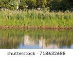 The Grass Beside A Pond.