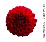 Red Dahlia Flower Isolated On...