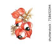 watercolor guarana. hand drawn... | Shutterstock . vector #718652344