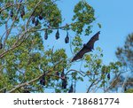 bat. flying fruit bat on blue... | Shutterstock . vector #718681774