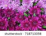 Chrysanthemum Flowers As A...