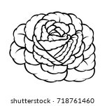 flower rose  black and white.... | Shutterstock .eps vector #718761460