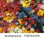 colorful tropical flower wall | Shutterstock . vector #718762294