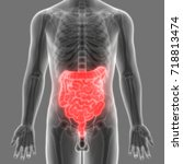 human digestive system anatomy  ... | Shutterstock . vector #718813474