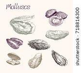 molluscs. collection of sea... | Shutterstock .eps vector #718816300