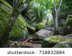 old stone stairs among mossy... | Shutterstock . vector #718832884
