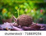 new born tree breaks out plant... | Shutterstock . vector #718839256