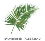 green branch of palm tree on... | Shutterstock .eps vector #718842640