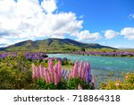 admiring the lupin flowers at... | Shutterstock . vector #718864318