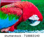 colors of nature | Shutterstock . vector #718883140