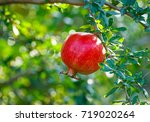 red pomegranate with green... | Shutterstock . vector #719020264