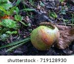 fluffy caterpillar creeps on...   Shutterstock . vector #719128930