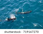encounter with long finned... | Shutterstock . vector #719167270