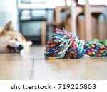 Stock photo colorful cotton dog toy on the floor with shiba inu sleeping background focusing at colorful cotton 719225803
