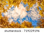 The Canopy Of Autumn Trees...