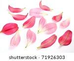 Stock photo petals of pink lilies 71926303