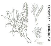 banksia seed pods vector... | Shutterstock .eps vector #719265358