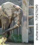 Small photo of African elephant