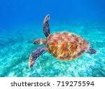 sea turtle swims in sea water.... | Shutterstock . vector #719275594