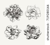 ink drawn peony flowers | Shutterstock .eps vector #719280166