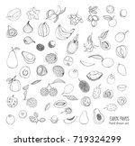 exotic tropical fruits hand...   Shutterstock . vector #719324299