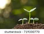 close up of spring bud growing... | Shutterstock . vector #719330770