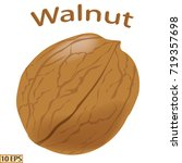 walnut in shell isolated on...   Shutterstock .eps vector #719357698