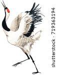 japanese crane bird watercolor...   Shutterstock . vector #719363194
