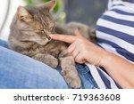 top view of a furry tabby cat...   Shutterstock . vector #719363608