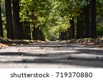 path in the autumn park ... | Shutterstock . vector #719370880