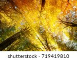 colorful tree canopy with... | Shutterstock . vector #719419810