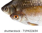 two raw fishes close up... | Shutterstock . vector #719422654