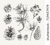 ink drawn pine cones | Shutterstock .eps vector #719457979