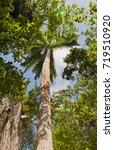 grand cayman island   august 18 ...   Shutterstock . vector #719510920