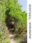 grand cayman island   august 18 ... | Shutterstock . vector #719511010