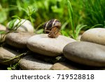 The Journey Of A Snail