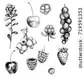 berries set. currant ...   Shutterstock .eps vector #719591353