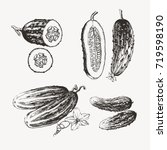 ink drawn cucumbers | Shutterstock .eps vector #719598190