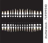 teeth  root dentist dental ... | Shutterstock .eps vector #719599540