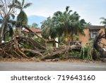 down banyan tree in miami... | Shutterstock . vector #719643160