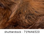 classy and luxurious red fox fur   Shutterstock . vector #719646523