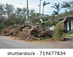 old banyan tree uprooted by... | Shutterstock . vector #719677834