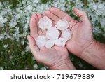 hail in hands after hailstorm | Shutterstock . vector #719679889