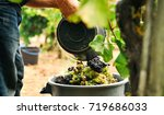 man putting grapes into the... | Shutterstock . vector #719686033